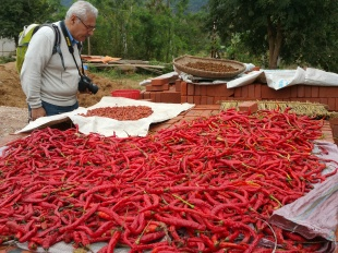 Chillies drying