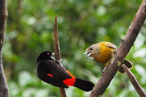 silencio-birds