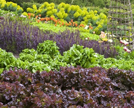 500x550-crop-080108.jpg