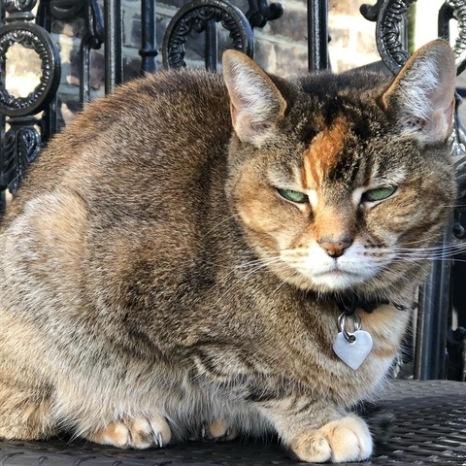 Grumpy cat on lockdown day